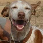 Anila lacht